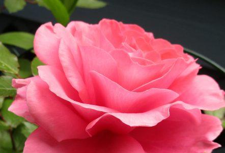 Garden Faith